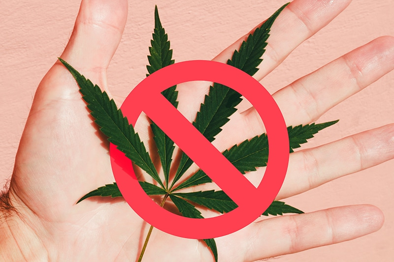 Signs-You-Should-Steer-Clear-of-a-CBD-Company-800x533px